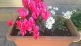 冬のお花たち。