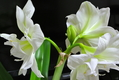 今日の花便り…② (18/02/14) (~o~)