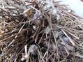 キンポウゲ科植物色々