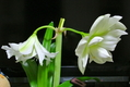 今日の花便り。(18/02/21) (^_^)v