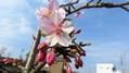 午後の作業中見つけた小さな春
