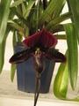 カラフルに…世界らん展、展示の花たち。
