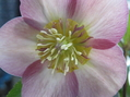 いっぱい咲いています🌸🌸