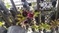 花郷園 KAGOEN NURSERY