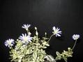 好きなお花