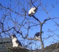 木登りの好きな猫