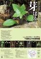 春の展示「芽ばえ」展のポスターとチラシ