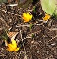 ちっさな黄色いお花♪