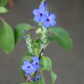 咲き続けている花たち[i:150]