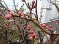 今日から三月、ようやく春の兆しが・・・。