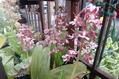 今日のお花たち(エビネ・フタバアオイ)