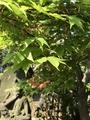 この木の名前を教えてくださいませ。