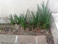 お庭の植物いっぱい