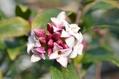 春の香り~