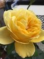 長〜い名前の薔薇