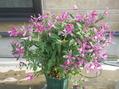 花がたくさん[i:207]