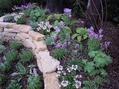 花壇の草花たち