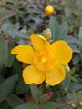 ふくおかルーバルガーデン2~夏🌻の庭便り❗今季初花💠が咲きました。