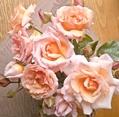 風傷みするバラを剪りました