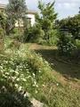 庭は春から夏への変わり時期