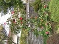 我が家の庭にも春の訪れ