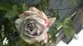 庭で種まき(^_-)-☆