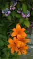 5月の庭の花のまたまた続き🌫️