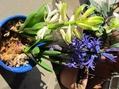 紫の花のつぼみ~~[i:139]