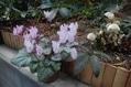 3月の庭から…その4