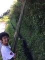 竹支柱調達