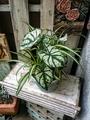 🌿観葉植物の寄せ植え①🌿