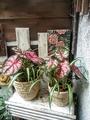 🌿観葉植物の寄せ植え②🌿