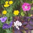 小さな花が色々咲いてます♫