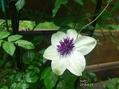 NaturalGarden四季を楽しむ花壇