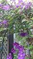 今日の 山の庭