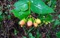 四季の草花