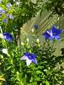 みてみて今朝の庭!