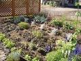 園芸種から野草へ