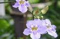 大温室の花達1
