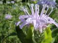 畑の花たち