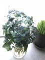 ホヤと庭の花