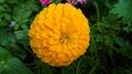 今朝の我が家の花たち
