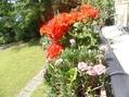 レマン湖畔の花