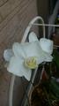 ☆真夏の白花☆