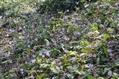 春の野草2