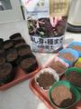 秋野菜の種を蒔きました。