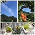 檜扇の開花を写せました〜〜