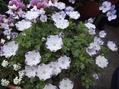 小さな花と大きな芽✿