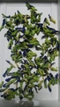 今年の蝶豆💙🌿