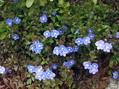 咲きだした花たち♪